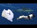 Dog Does Amazing Dive Ft Gabe Borking Stars mp3