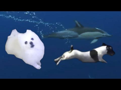 Dog does amazing dive ft. Gabe - Borking Stars