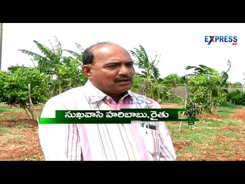 90 fruit varieties in one acre Successful Integrated farming in 10 acres by S Haribabu Part 1