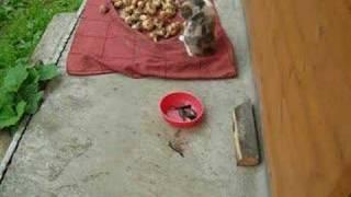 Кошка и живая рыба