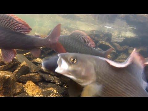 реки красноярского края для ловли хариуса