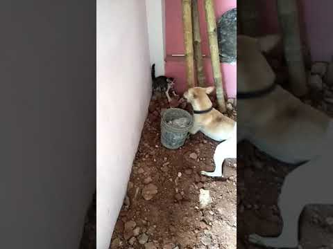 Dog attack on cat 🙀