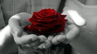 Ditian Till Roses Fall