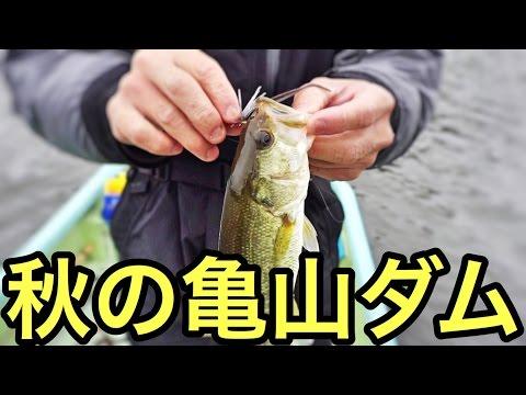 [亀山ダムでバス釣り]難しい秋をスモラバで攻略・後編[フープジグ絶好調]