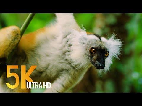 5K Madagascar Wildlife - Incredible Nature and Wildlife of Madagascar - 4 HOURS Video