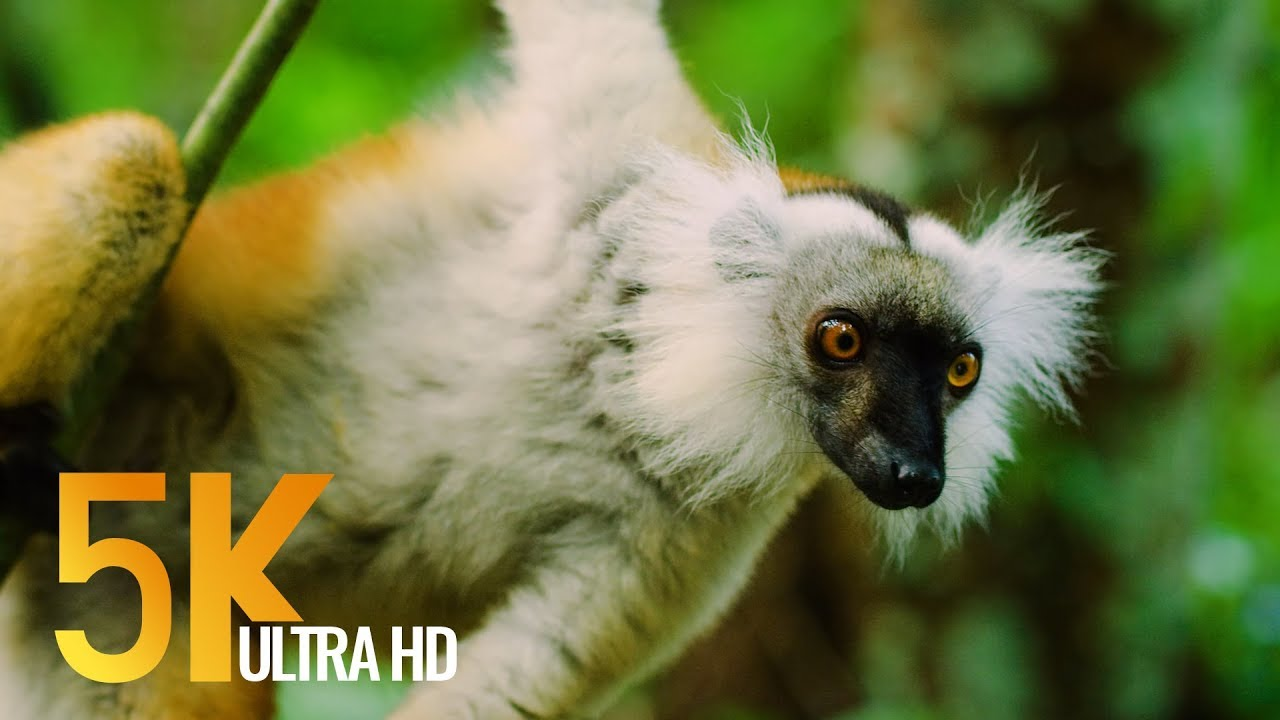 Download 5K Madagascar Wildlife - Incredible Nature and Wildlife of Madagascar - 4 HOURS Video
