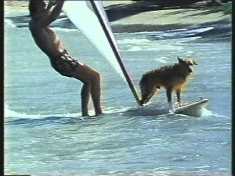 Windsurf - 1980s - Riding the Wind with Fraser Black