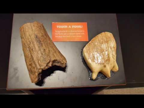 Nuotykiai Amerikoje 33: Museum of the Rockies