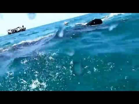 Swimming with Whale Sharks, Tanzania