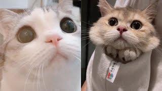Những chú mèo đáng yêu nhất quả đất | Yêu Pets