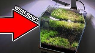 New Next Level Aquarium Projects