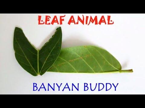 Banyan Buddy | Hindi | Two Leaf Cat!