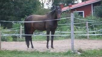 Hevoset vaihtoon -videopostaus