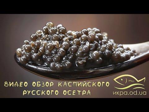 Видео обзор Каспийского русского осетра 250г в жесть банке под резинку