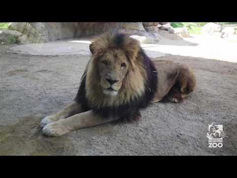 Melbourne Zoo General Admission, VIC | Experience Oz