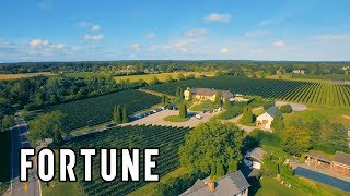The Heartwrenching Story Behind This Hamptons Vineyard I Fortune
