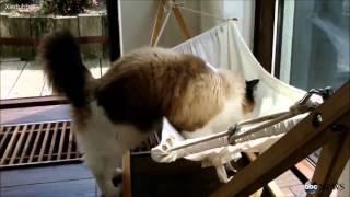 Подарили коту гамак...