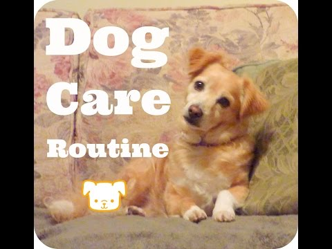 Dog care  Routine:: How I take care of my dogs