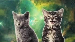 Поющие кошки