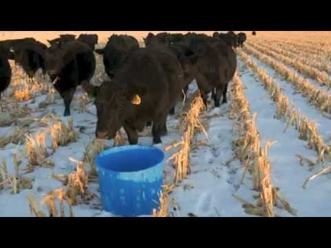 Vitalix Livestock Tubs.mp4