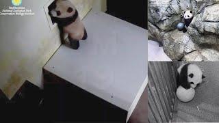 2021-02-15 Xiao Qi Ji ~ The Platform Window!