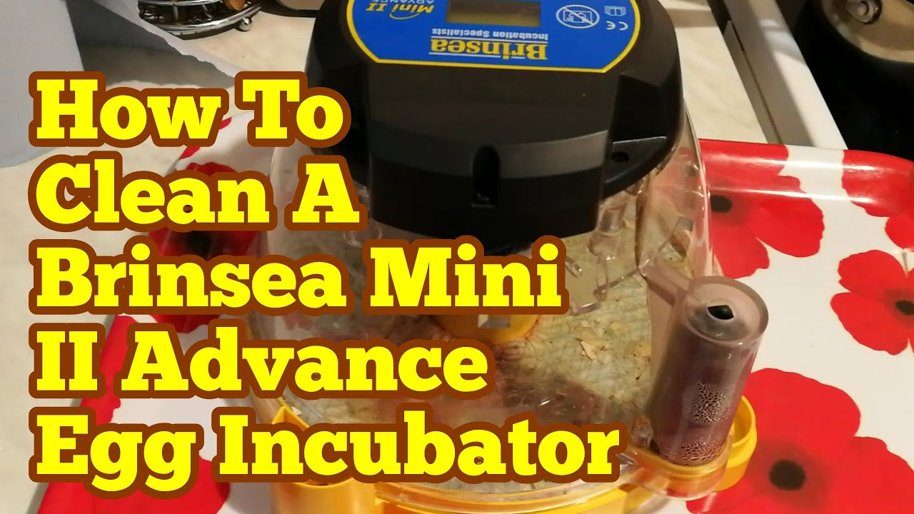 How To Clean An Egg Incubator Brinsea Mini Ii Advance Egg Incubator Youtube