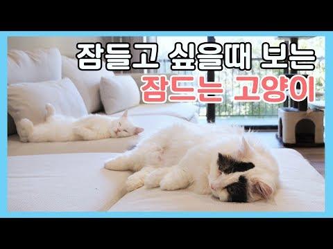 잠들고 싶을때 보는 잠드는 고양이 😪 꼬리는 안 잔다 - 생활잡음
