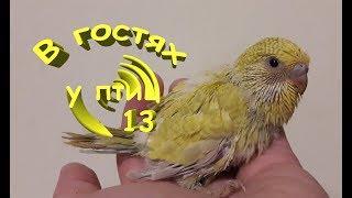 В гостях у птиц 13: Превращение птенцов