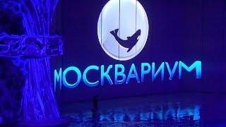 Москвариум – водное шоу.  8 тыс. различных морских животных со всего мира.