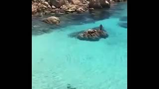 Cala Coticcio Beach In Sardinia , Italy