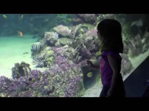 A Look Inside SEA LIFE Sydney Aquarium