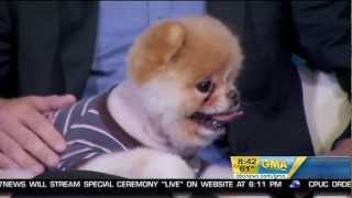 Boo - The World's Cutest Dog on Good Morning America