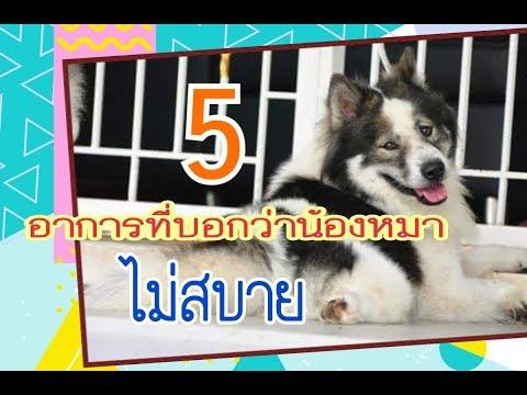 5 อาการอันตรายที่บอกว่าสุนัขป่วย | แม่นิวชิลหม่ามี๊