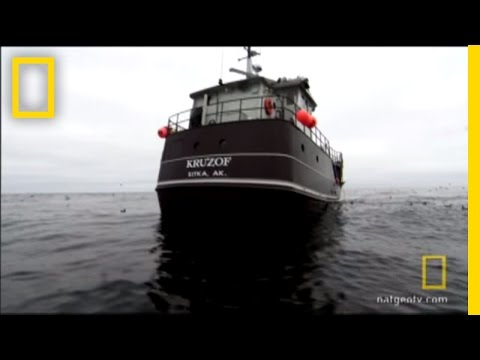 Fish Guts | National Geographic