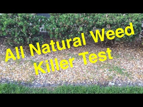 Vinegar and Soap Organic Weed Killer - DIY 100% Natural Safe for the Environment