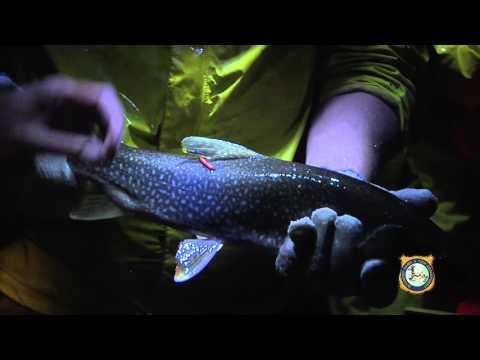 Jackson Lake Trout Sampling