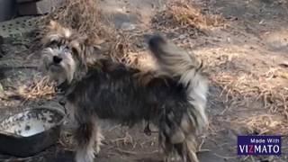 Смешное видео! Собака танцует !