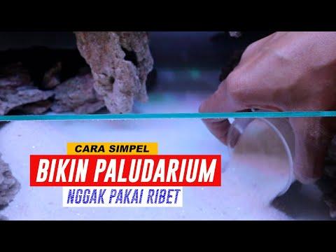cara-pemasangan-pasir-silika-di-aquascape-|-paludarium-pemula-part-1