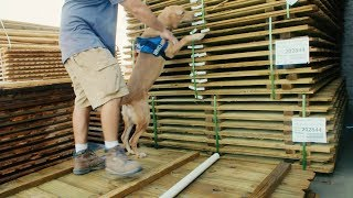 How to Train Dogs for Rescue | Train a Search Dog | Tracking Dogs | Rescue Dogs