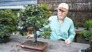 Plant City Bonsai June 2014