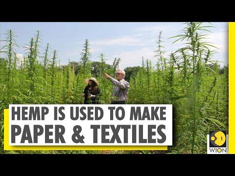 Hemp – The wonder plant | Growing hemp for a 'high' economy
