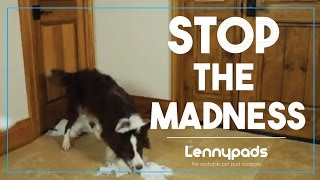 Tired of disposable potty pads? Try Lennypads