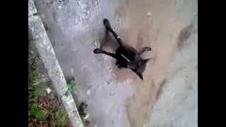 бешеная собака(пьяный мужик увидел перед собой собаку и ударил его по голове и у нее началось бешенства., 2013-09-13T11:35:17.000Z)