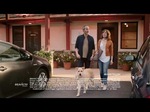 BRAVECTO TV Commercial: Protect Your Dog From Fleas & Ticks (2020)