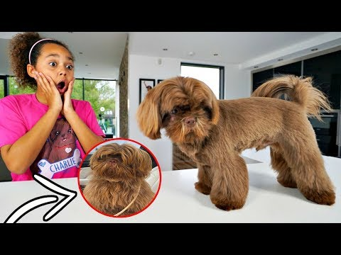 CUTE PUPPY MAKEOVER TRANSFORMATION!!