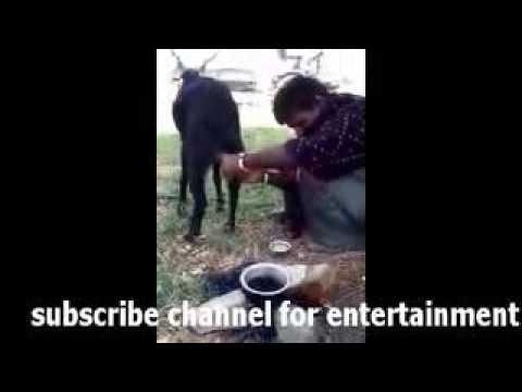 2016 - Street talent pakistan très drôle vidéo hahaha