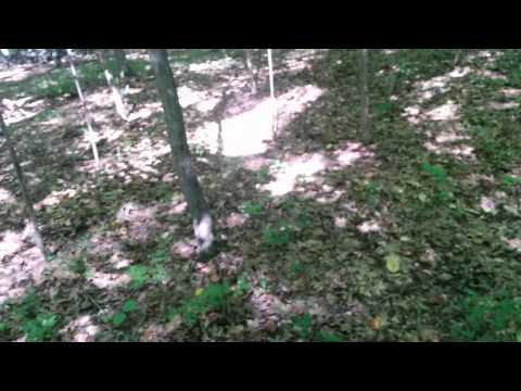 2015 Connecticut Deer Hunting