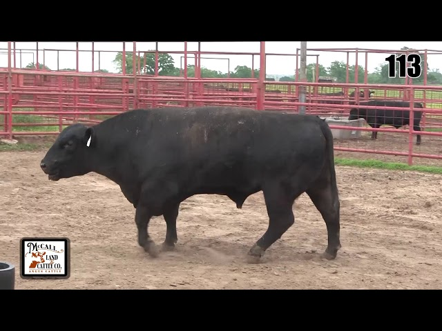 McCall Land and Cattle Lot 113