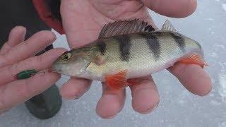 Рыбалка в январе. Начало положено.  My fishing.