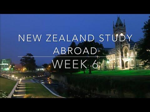 New Zealand Study Abroad : Week 6